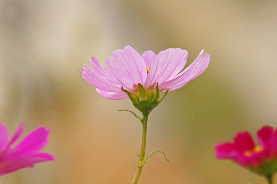 Reach for the Sun by Judy Pics - Flowers Flowers in the Wild ( green, pink, stem, flower, floral )