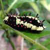 Caterpillar of Common Mime