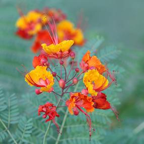 by K Dawn McDonald - Flowers Flower Gardens