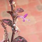 Flower of Pink polka dot