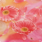 Flower Live Wallpaper HD icon