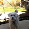 Dog (Pemberton)