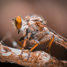 by Ady Putra - Animals Insects & Spiders
