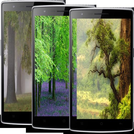 樹動態壁紙 娛樂 App LOGO-APP試玩