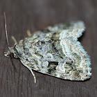 Large Mossy Lithacodia Moth