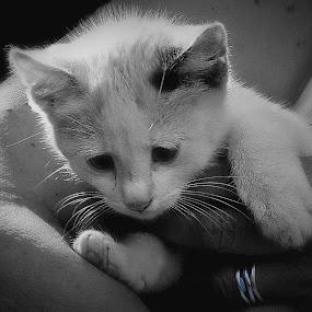by Branko Levačić - Animals - Cats Playing