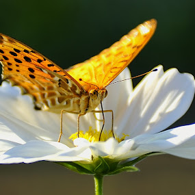 Butterfly by Leka Huie - Animals Insects & Spiders (  )