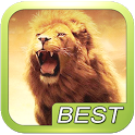 Lion Roar Animals Sound icon