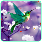 Humming Bird Live Wallpaper