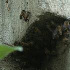 Wall Bees