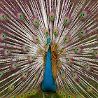 Nice Birds icon