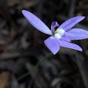 Wax lip orchid