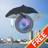 Whale Camera