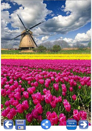 Flower Images