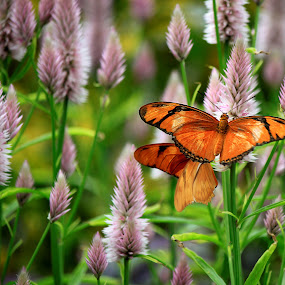 Butterflies by Mili Shrivastava - Animals Insects & Spiders ( nature, butterflies, colors, flowers,  )