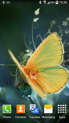 나비 애니메이션 배경 화면