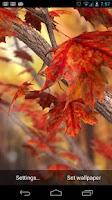 Screenshot of Autumn Tree Free Wallpaper