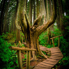 A Rain Forest Hobbitat Walk by Gary Hanson - Nature Up Close Trees & Bushes ( washington, tree, camp flattery, walkway, hobbit, shrubs, , renewal, green, trees, forests, nature, natural, scenic, relaxing, meditation, the mood factory, mood, emotions, jade, revive, inspirational, earthly )