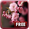 Sakura Live Wallpaper 1.0.7 Apk