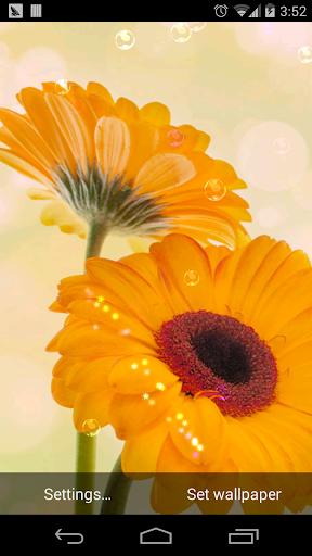 玩免費個人化APP|下載雨天夢幻繽紛花朵壁紙 app不用錢|硬是要APP