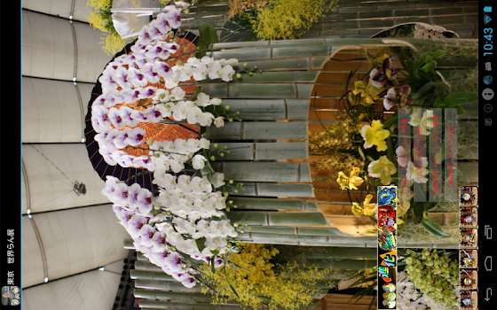 International Orchid Festival