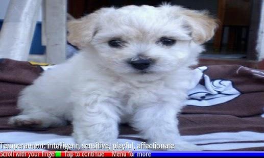 Puppies and Dogs- screenshot thumbnail