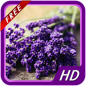 Lavender HD Wallpapers