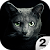 Find a cat 2. Free! file APK for Gaming PC/PS3/PS4 Smart TV