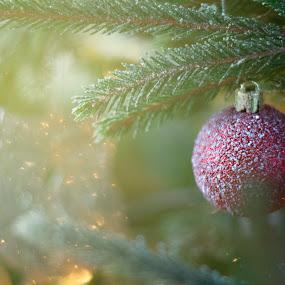 Christmas Ornament by Ozge Kesim Yurtsever - Public Holidays Christmas ( ball, christmas, christmas ornament,  )
