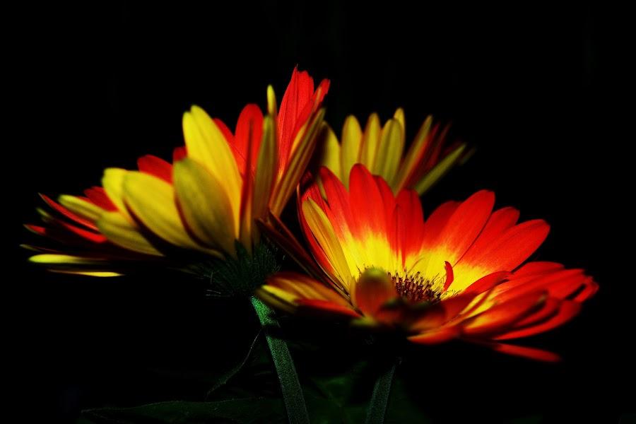 by Suzanne Cappetta - Flowers Flower Arangements