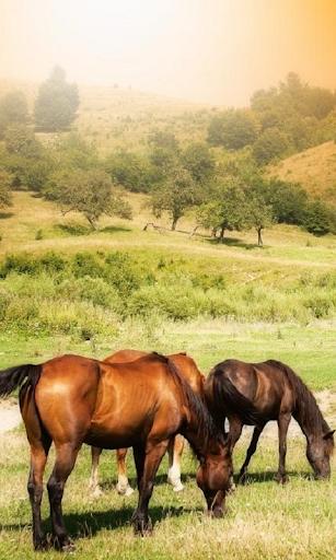 Pferde Live Wallpaper