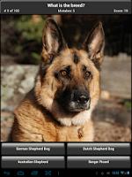 Screenshot of Dog Breed Quiz