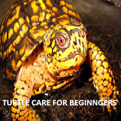 How To Care For A Tortoise