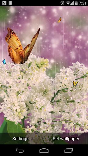 蝴蝶花壁纸