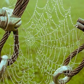 A cobweb full the morning dew. by Zeljko Jelavic - Nature Up Close Webs ( cobweb, web,  )