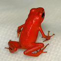 How to Buy Exotic Pets icon