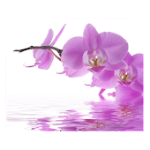 Orchids In Water V