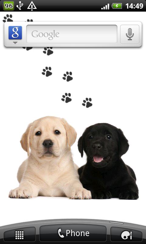 Labrador puppies wallpaper - screenshot