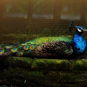 by Sarol Glider - Animals Birds
