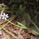 Narrowleaf blue-eyed grass