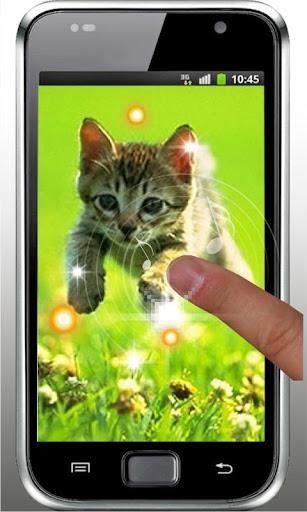 【免費個人化App】Pet Kittens HD Live Wallpaper-APP點子