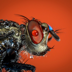Fly # 7 by Dave Lerio - Animals Other