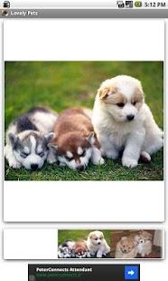 Lovely Pets - screenshot thumbnail