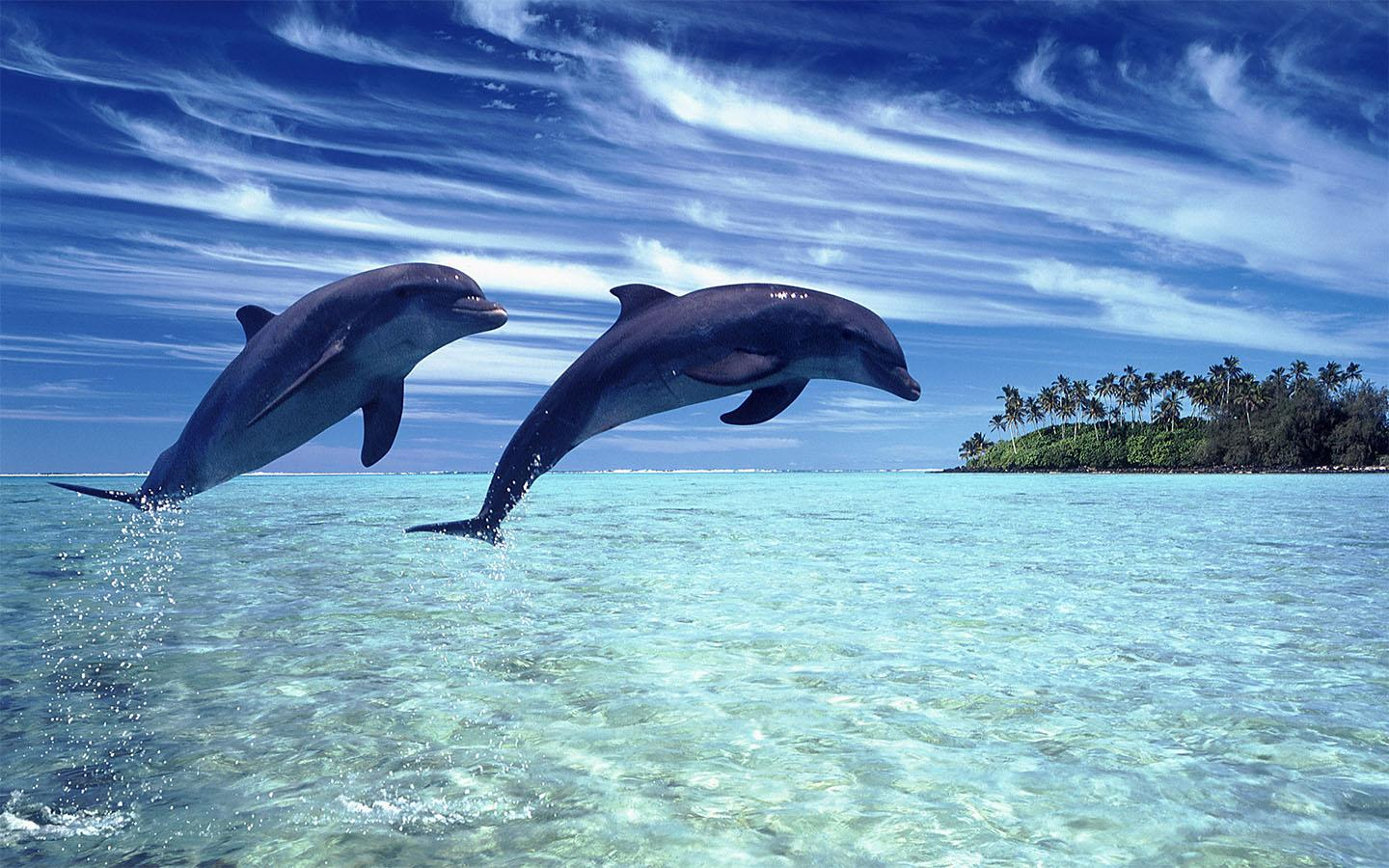 View Original Size. Dolphins Desktop Wallpapers 45 HD Wallpapers ...