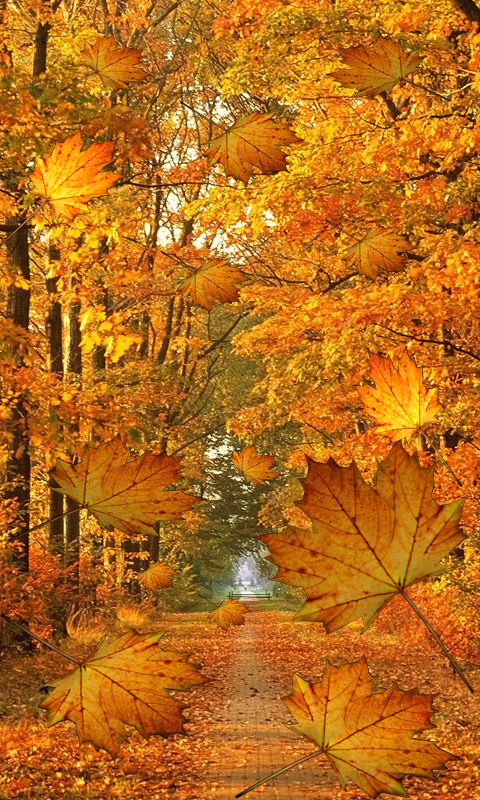 fall live wallpaper android apps on google play