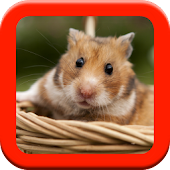 Hamster Care Guide
