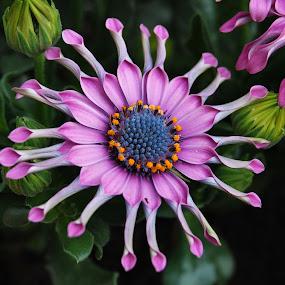 by Danny Vandeputte - Flowers Flowers in the Wild
