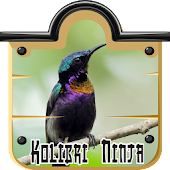 purple throated sunbird
