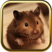 Free Hamster Puzzle Games