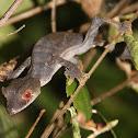Satanic Leaf-Tailed Gecko